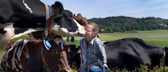 Ce-sunt-fermele-organice-de-lapte