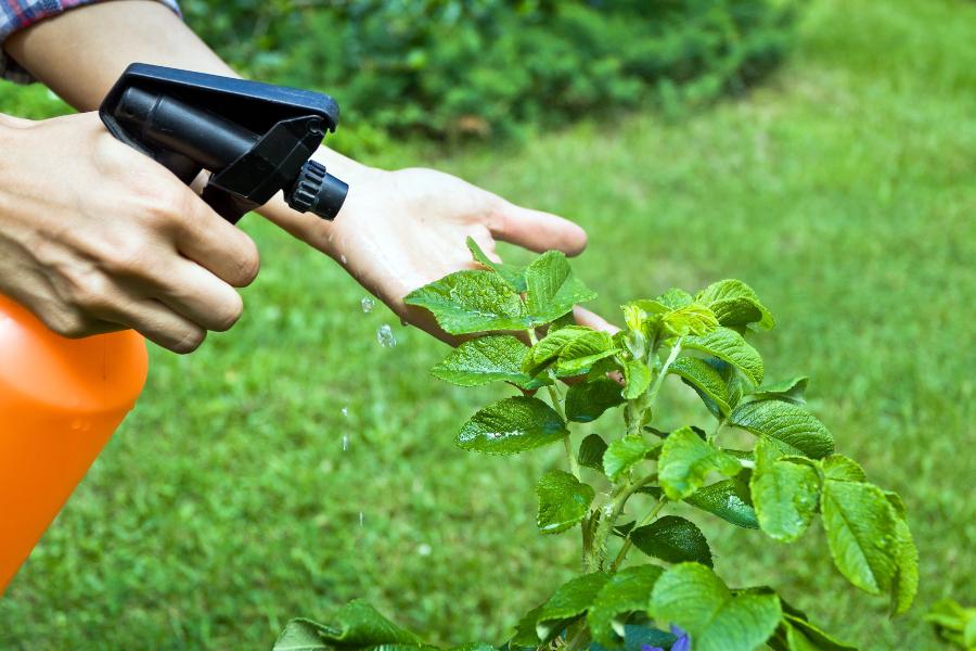 De cate tipuri sunt insecticidele?